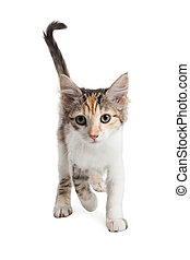Cute Kitten Walking Forward Over White