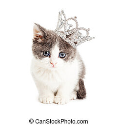 Cute Kitten Wearing Princess Crown - Cute little five week...