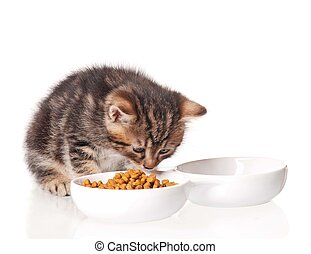 Cute kitten with bowl for a forage over white background