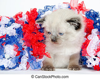 Cute kitten with fourth of july decorations