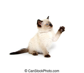 Cute kitten with paw up
