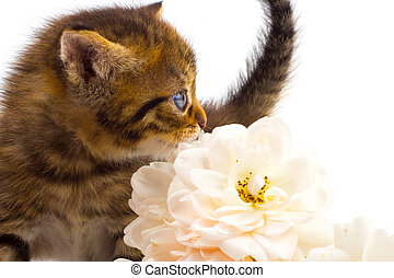 Cute kitten with rose
