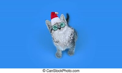 Cute kitten with Santa hat and beard with glasses on blue