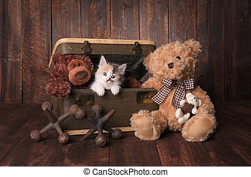 Cute Kitten With Teddy Bears Looking at Viewer