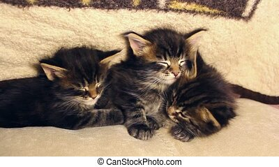 cute kittens hugging each other in sleep
