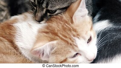 Cute Kittens Resting Together