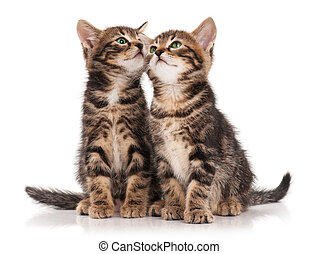 Cute kittens - Two serious cute kittens isolated on white...
