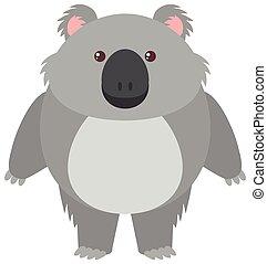 Cute koala bear on white background
