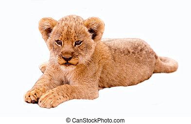 Cute Lion Cub - Cute lion cub isolated in white
