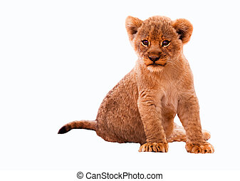 Cute Lion Cub - Cute lion cub isolated on a white background