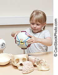 Cute litte girl (5 years old) playing with anatomical models of human eyes, brains and skulls