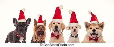 cute litte puppies wearing santa claus hats