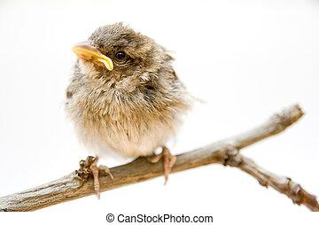 Cule little bird