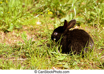 Cute little black baby rabbit on green grass in the farm yard. Retro style toned