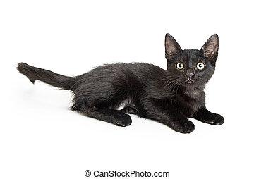 Cute little black kitten on white