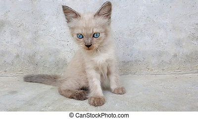 cute little cat kitten with blue eyes