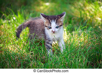 little cat playing on the grass