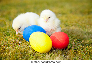 Cute little chicks next to easter eggs