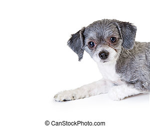 Cute Little Crossbreed Dog Side View