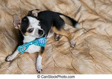 cute little dog portrait with blue butterfly