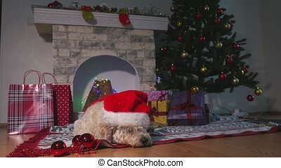 Cute little dog with Christmas hat laying on the floor and waiting For Christmas