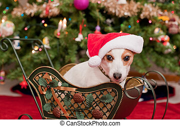 Cute Little Dog with Christmas Hat