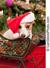Cute Little Dog with Christmas Hat Sit in Sleigh infront of...