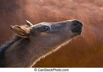 cute little foal