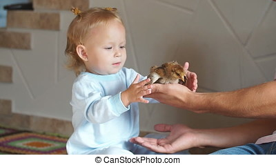 Cute little girl is touching the chicken