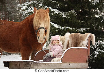 Cute little girl sitting in the sledges and big palomino...