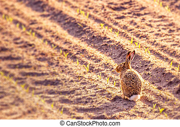 Cute little hare in a kitchen garden