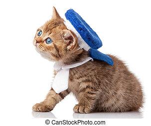 Cute little kitten. kitten with blue eyes. Kitten on a white background