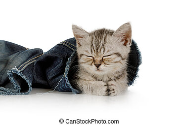 Cute little kitten sleeping in jeans leg