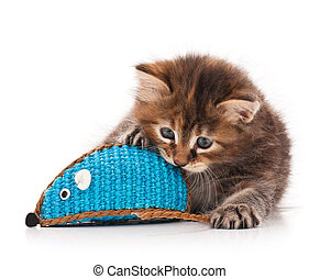 Cute little kitten with toy mouse isolated on white ...
