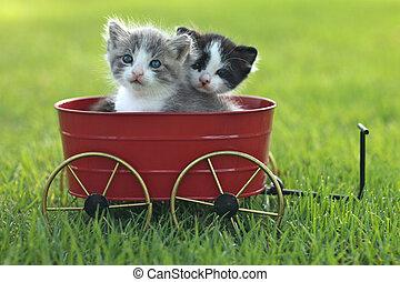 Kittens Outdoors in Natural Light - Cute Little Kittens ...