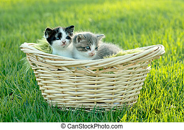 Kittens Outdoors in Natural Light - Cute Little Kittens...