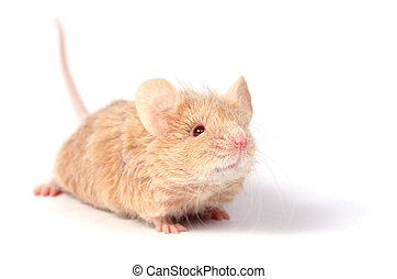 Cute Little Mouse Cute Little Gerbil With Open Gift Box