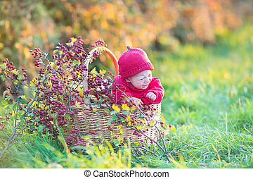 Cute little newborn baby in a big basket with apples and red ber