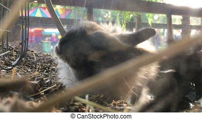 cute little rabbit drinks water close up