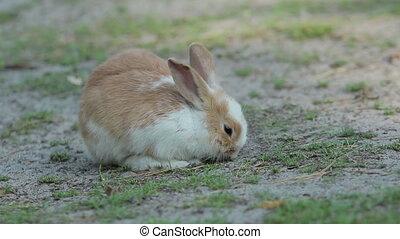 Cute Little Rabbit On The Grund - Little cute baby rabbit...