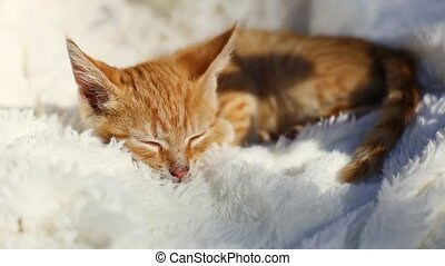Cute little ginger cat sleeping on a white pile fluffy blanket Young cute little red kitty.The sun's rays warm the long-haired kitten. Cute funny home pet
