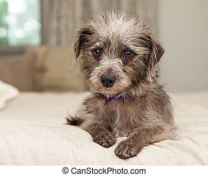 Cute Little Terrier Crossbreed on Bed