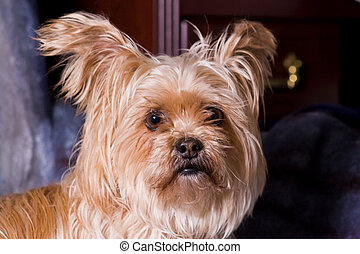 Cute Little Terrier Dog