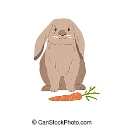Cute lop rabbit. Happy bunny sitting near carrot. Domestic animal with fluffy fur. Adorable fuzzy coney pet. Flap-eared breed of rodent. Realistic flat vector illustration isolated on white background.