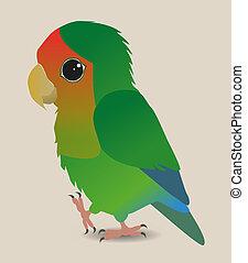 Cute lovebird - A very cute peach faced lovebird parrot