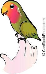 Cute lovebird parrot vector