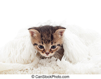 cute, macio, cobertura, fundo, gatinho, branca