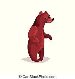 cute, marrom, pardo, ilustração, vetorial, urso, caricatura