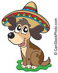 cute, mexicano, cão