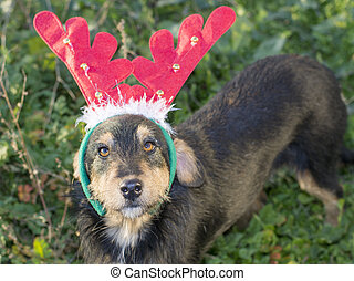 Cute mix breed dog with reindeer horns standing in the grass